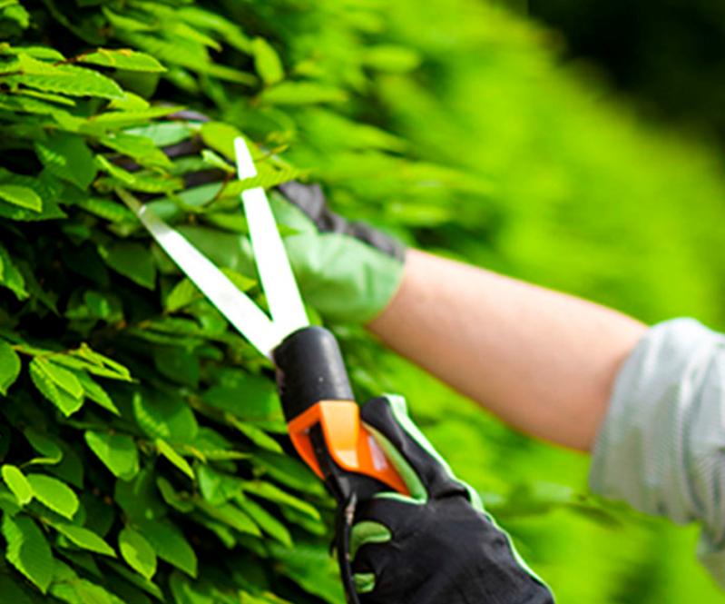 Empresa de Manutenção de Jardins Preço Perdizes - Empresa de Manutenção de Jardins