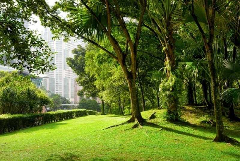 Empresa de Manutenção e Conservação de Jardins Vila Endres - Empresa de Manutenção de Jardins