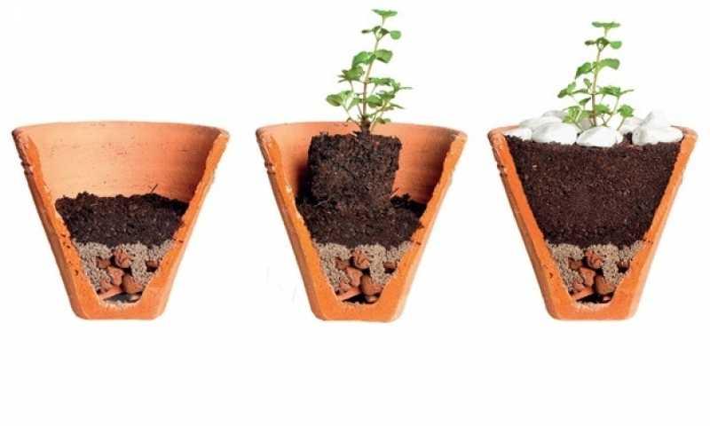 Empresa de Montagem de Vasos Paraíso do Morumbi - Empresa de Montagem de Vasos de Vidro