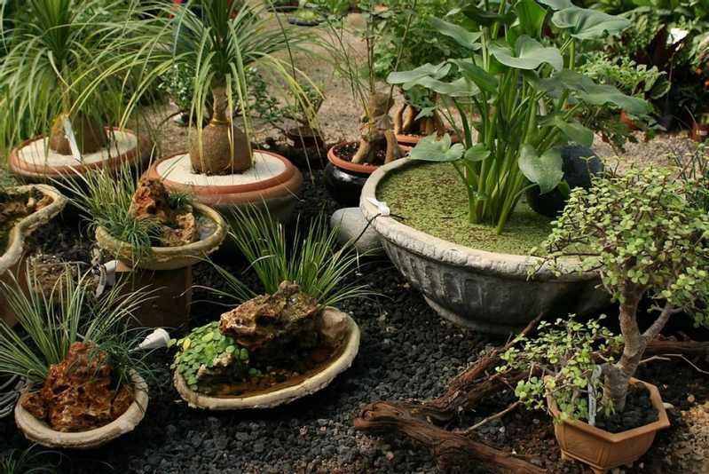 Empresa de Montagem Vasos Cotar Jardins - Empresa de Montagem de Vasos de Vidro