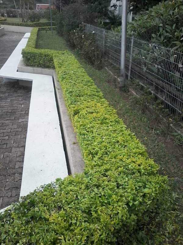 Qual o Valor de Construção de Jardins e Manutenção Vila Maria Alta - Construção de Jardins para Condomínios