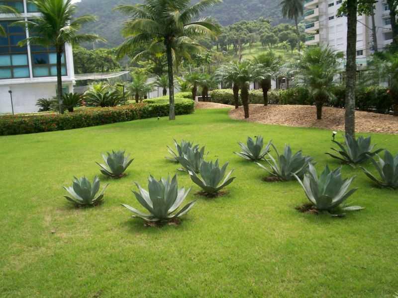 Quanto Custa Manutenção de Jardins Paisagismo Barueri - Empresa de Manutenção de Jardins