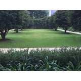 contratar firma de jardinagem Jardim Londrina