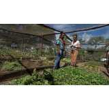 controle de pragas em hortas orgânicas valores Chácara Santo Antônio