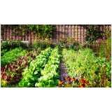 controle de pragas em hortas orgânicas Vila Endres