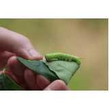 controle de pragas em jardins