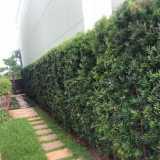 empresa de poda de jardim residencial São Bernardo do Campo