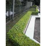 empresa de serviço de paisagismo para casas Brasilândia