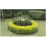 manutenção e conservação de jardins Vila Guilherme