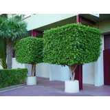 poda de árvores de jardim valor Vila Boaçava