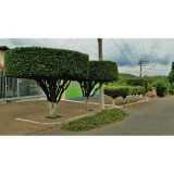 poda de árvores de jardim Jaguaré