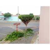 poda de jardim residencial valor Cambuci