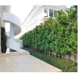 poda de jardim residencial Francisco Morato