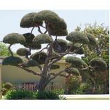 poda oliveira jardim valor Sacomã