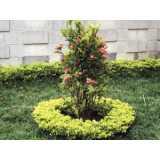 poda de plantas de jardim