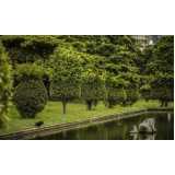 preço de poda de jardim Santo André