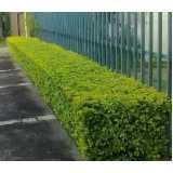 preço de poda de plantas de jardim Chácara Flora