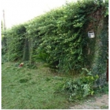 qual o preço de serviço de jardinagem com poda Guarulhos