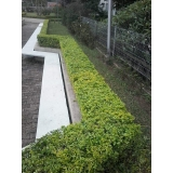 qual o valor de construção de jardins e manutenção Luz