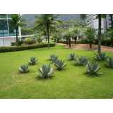 quanto custa manutenção de jardins paisagismo Vila Jaraguá
