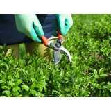 quanto custa manutenção jardins Sacomã
