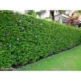 serviço de jardinagem com poda preço Butantã