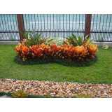 serviço de jardinagem e paisagismo preço Butantã