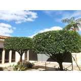 serviço de poda de árvores de jardim Sacomã