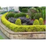 serviço de poda de plantas de jardim Itaquaquecetuba