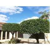 serviço de poda oliveira jardim Tremembé