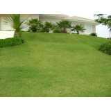serviço de jardinagem com paisagismo